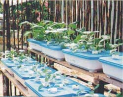 Figure 3 Trough Hydroponics Is Suitable for Small Areas