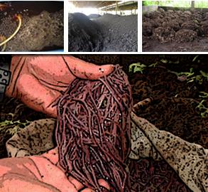 Organic Blend Fertilizer Business 1
