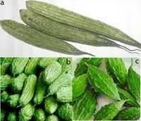 ampalaya varieties