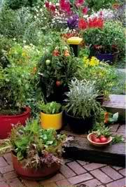 edible landscape garden