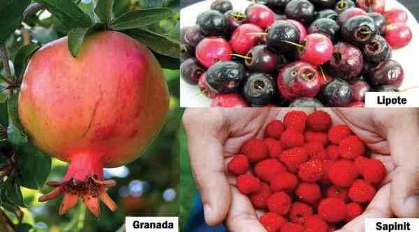 pinoyfruits