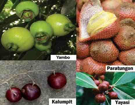 pinoy fruits