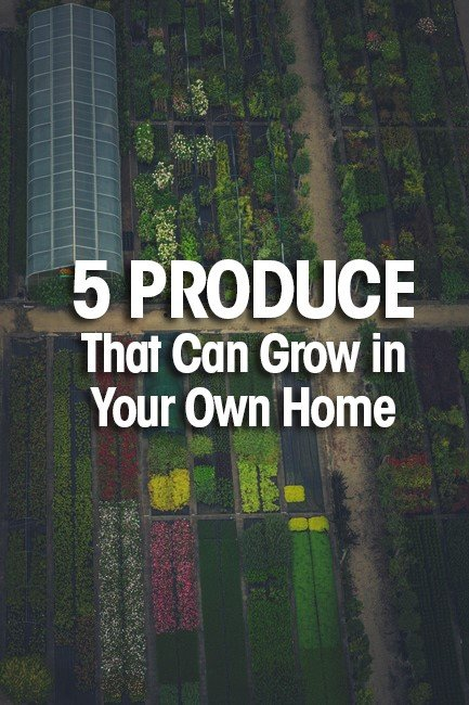 grow in your own home