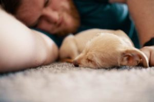 adorable-animal-blur-1750379 3