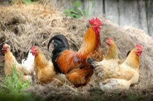 livestock-management-software 3