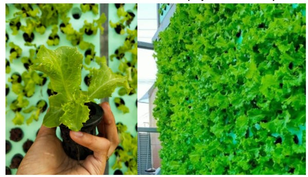 vertical farm project