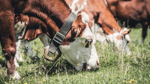 livestock keeping