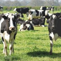 Organizing Your Cattle